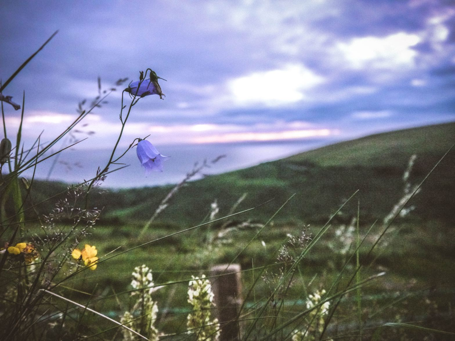 Image shows a fence and wildflowers in the foreground, hillsides behind