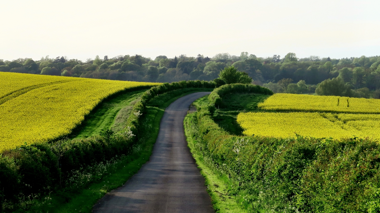 image is of a hedge-lined road winding through countryside