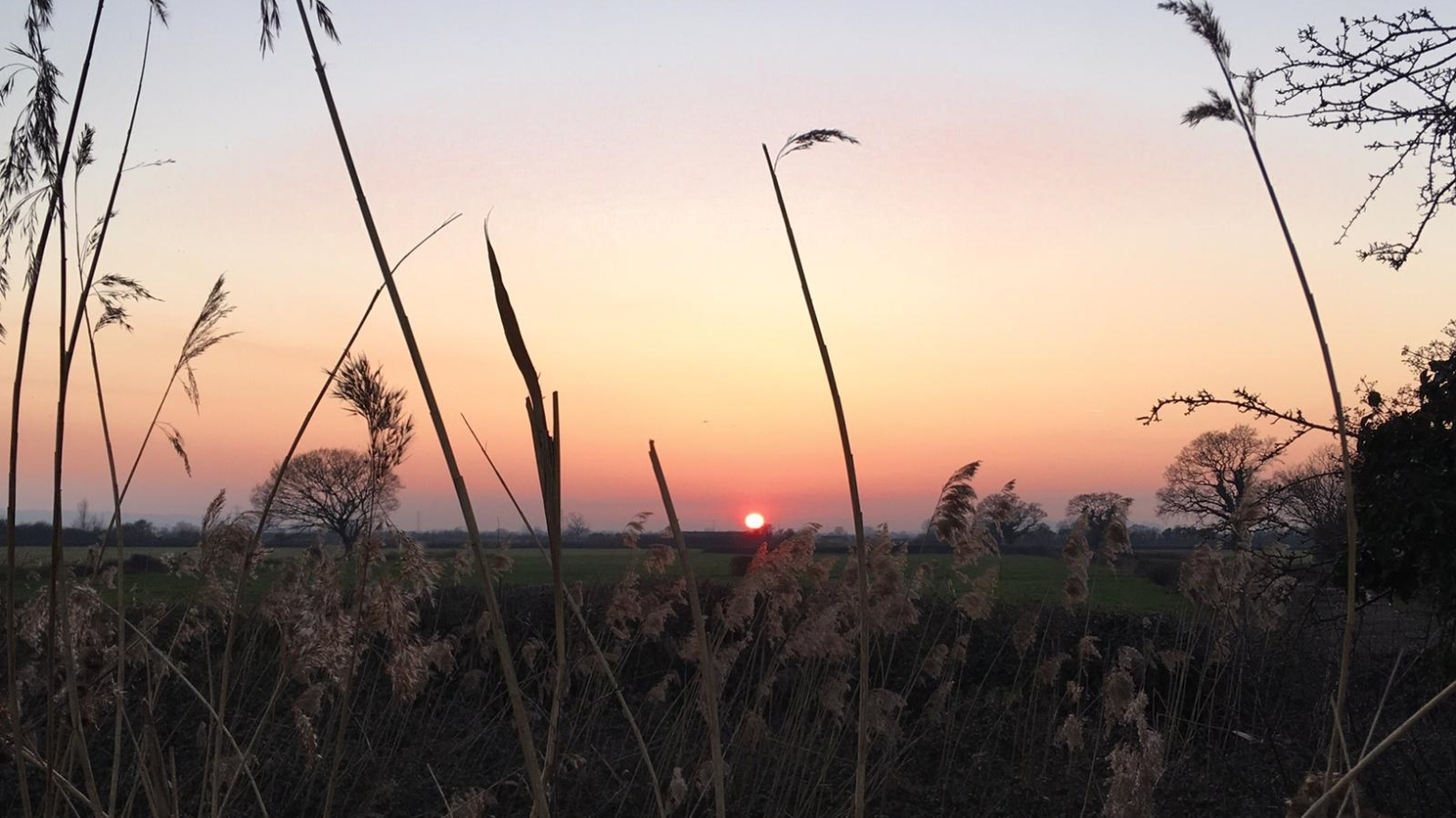 Image is of a sunset through summer grasses