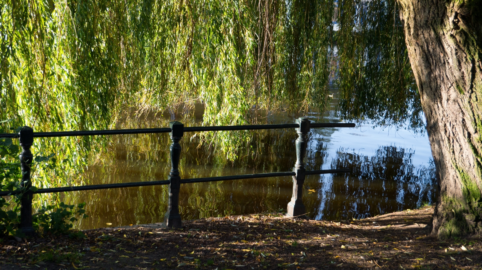 Image shows a willow tree overhanging a lake or river