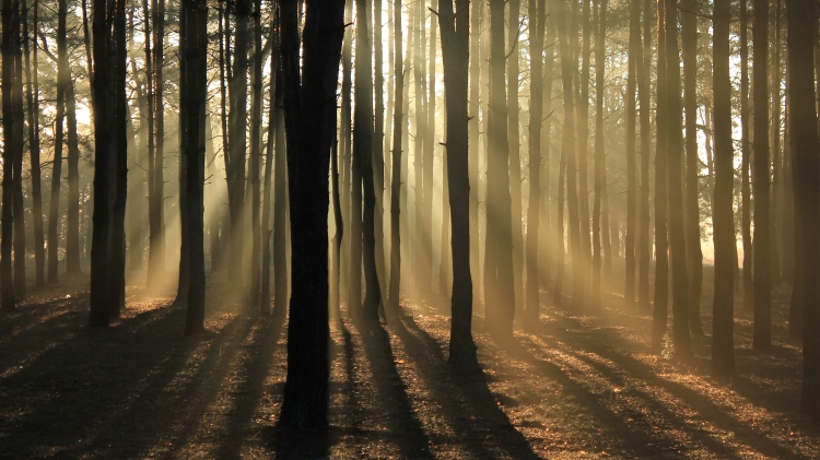 Image shows the sunlight streaming through trees in a woodland
