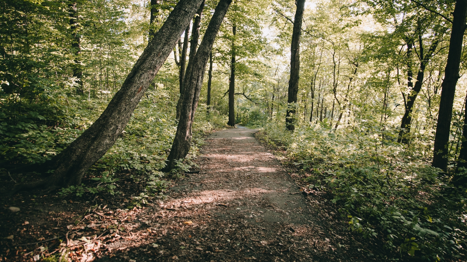 Image shows a woodland path