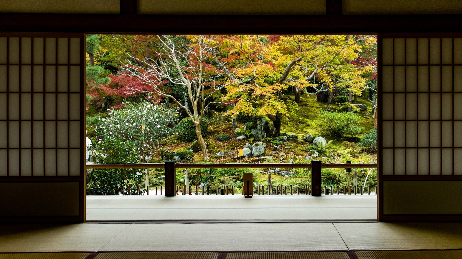 photo looking out from a traditional Japanese house to a natural looking wooded garden